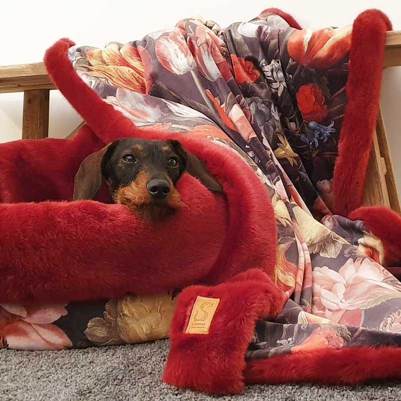 Hondenmand voor Teckel in Budel