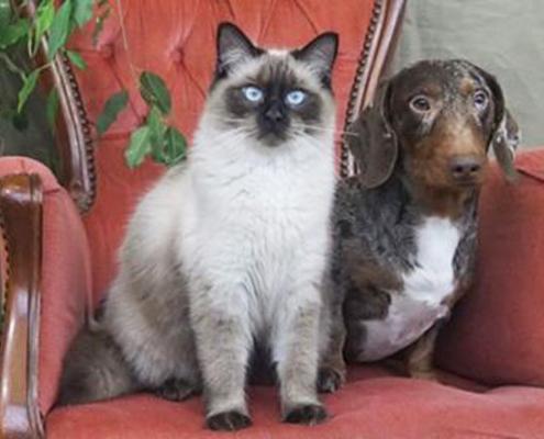 Mand voor hond en kat