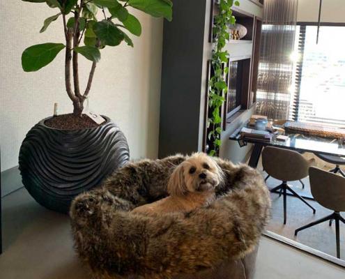 Handgemaakte hondenmand Veldhoven