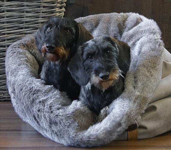 2 honden in 1 mand